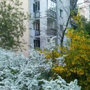 hej, hej.. zobaczcie jak jest ładnie na moim osiedlu :)