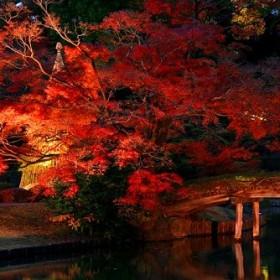 japanese garden's