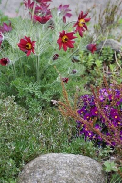Rośliny, Roślinki z mojego ogrodu