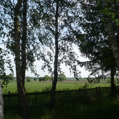 ............i widok na pole.............w dali słychać żurawie.............