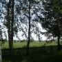 Pozostałe, Maj w moim lasku.................. - ............i widok na pole.............w dali słychać żurawie.............