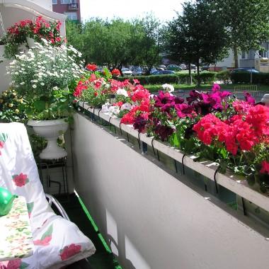 lato na balkonie 2011