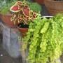 Rośliny, moje kochane roślinki