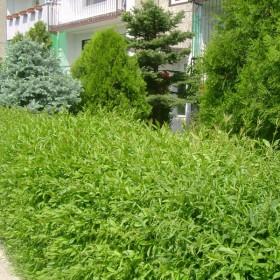 W zielonym gaiku..... i moim balkonie