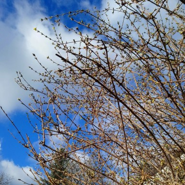 Wiosennie ................słonecznie...................radośnie , aż chce się śpiewać o wiośnie ........................a w mojej dzisiejszej galerii zające ....................i kwiatki ................. wiosenne haftowanki i wiosenny wianek ....................pozdrawiam Was bardzo serdecznie i słonka życzę :)