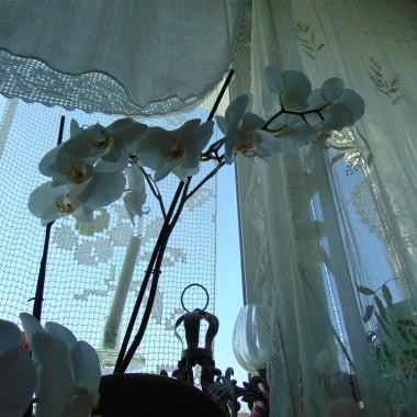 ...................i kwiaty na oknie............