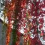 Pozostałe, Galeria jesienna.................październikowa............. - ...............i czerwone wino...........