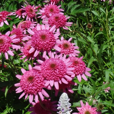 Kwiaty z wakacji i nie tylko