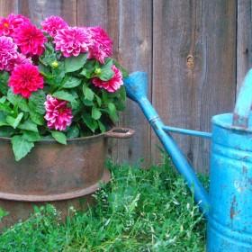 kolory lipcowego ogrodu:)