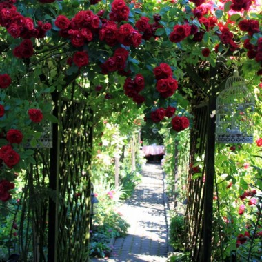 Piękne przejście różane
