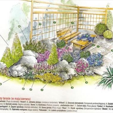Rabaty w ogrodzie - kompozycje, projekty i inspiracje