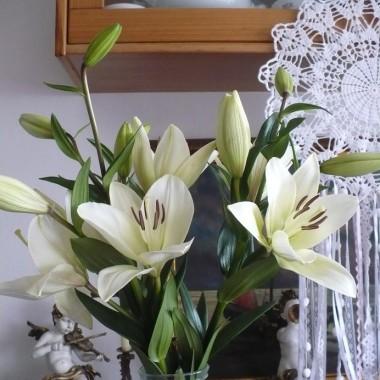 ..............i lilie w domu...............