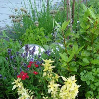 ziołowy ogródek przy tarasie