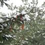 Leśne klimaty, GRUDNIOWY DZIEŃ...