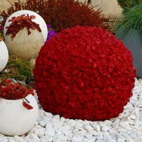 Wiosenna metamorfoza w ogrodzie