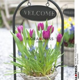 Wiosenny zawrot glowy............By Flora Press