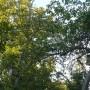 Pozostałe, Galeria jesienna.................październikowa............. - ..............jeszcze zielony sad.............