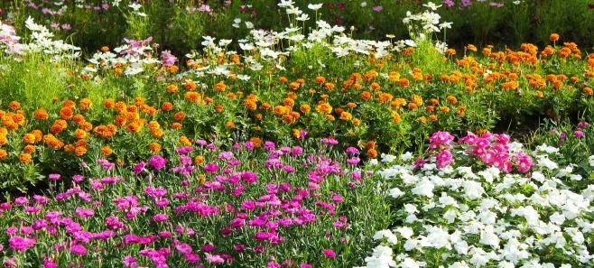 Cztery nawozy, które każdy ogrodnik powinien znać. Naturalne i skuteczne
