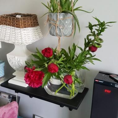 Galeria kwiatów .