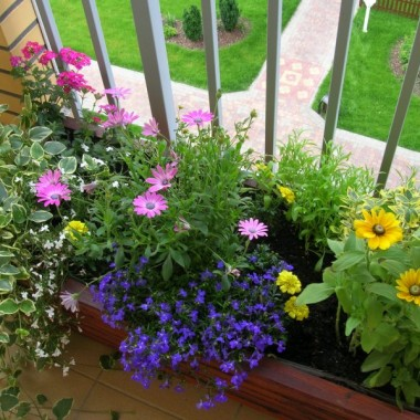 Mój mini ogródek