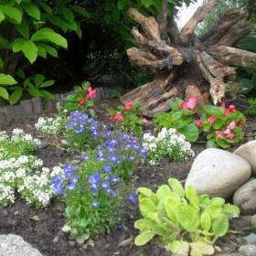 Majowe Święto i majowy ogród :)