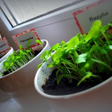 Domowy ziołowy ogródek