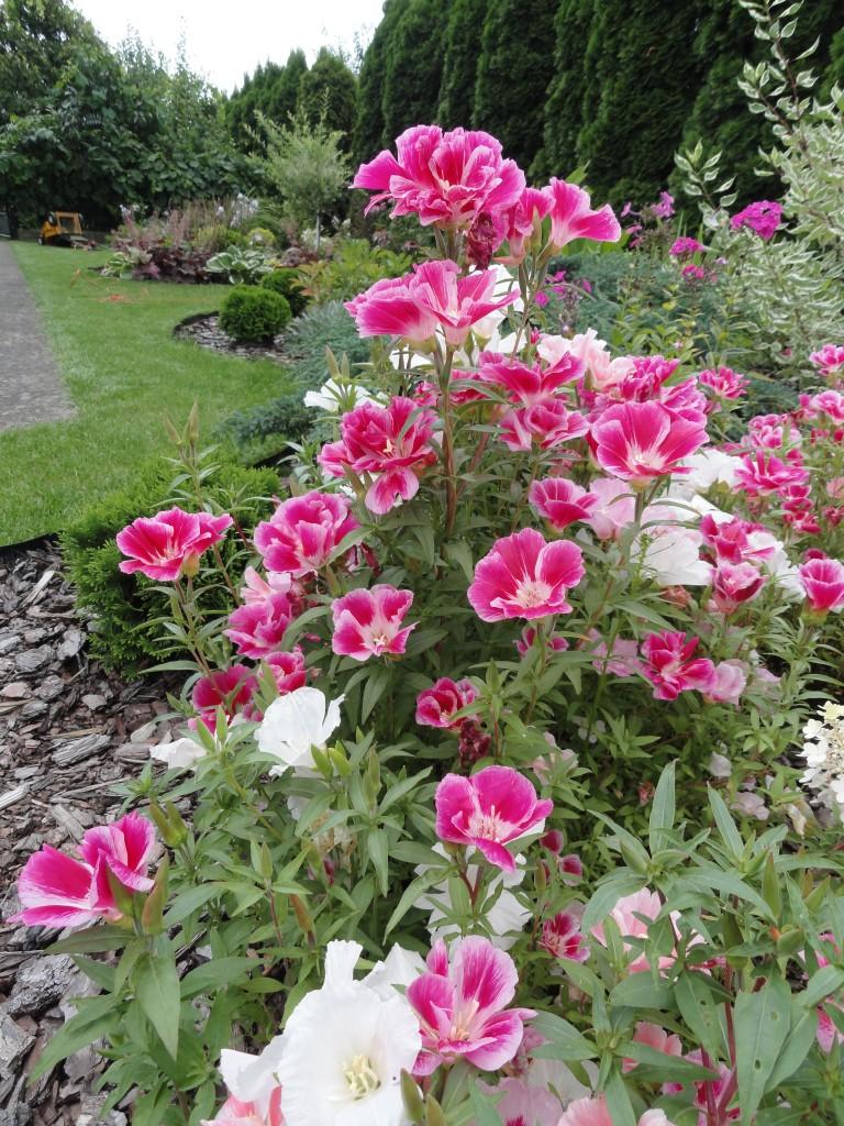 Godecjowy ogród