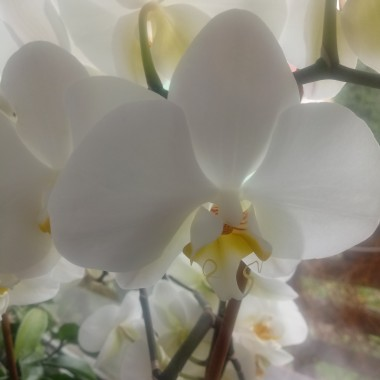 Lubię kwiatowe mordki storczyków.