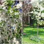 Pozostałe, Wiosna okiem tendom.pl, czyli niezwykły ogród Kasi - Więcej na naszym blogu: http://tendom.blogspot.com/2014/05/soneczna-energia.html