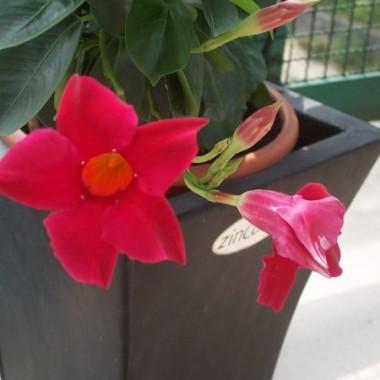 Kwiatki na balkonie