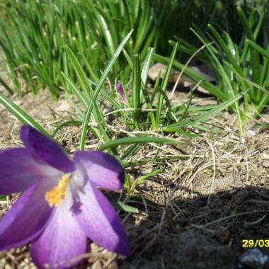 Nareszcie wiosna:)