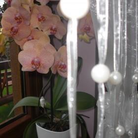 Moje kochane storczyki :)