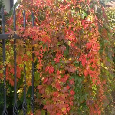 Kolorowa jesień:)