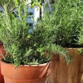 Apteka w ogrodzie: Pokonaj stres roślinami!