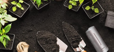 Smart-ogródek – jak inteligentna stacja pogodowa może pomóc w ogrodzie?