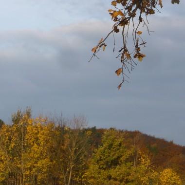 ................i widok na jesienny las.................