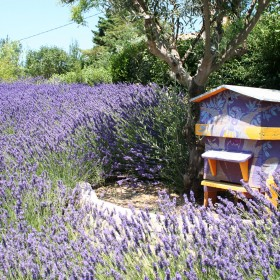 Pszczoły - dlaczego warto zaprosić je do swojego ogrodu?