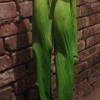 wys. 95 cm.szer. podstawy 22 cm.