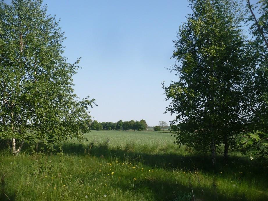Pozostałe, Maj w moim lasku.................. - .................i wiejskie klimaty..............