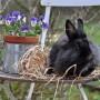 Dekoracje, Zyczenia swiateczne z zajaczkiem (kroliczkiem)*****