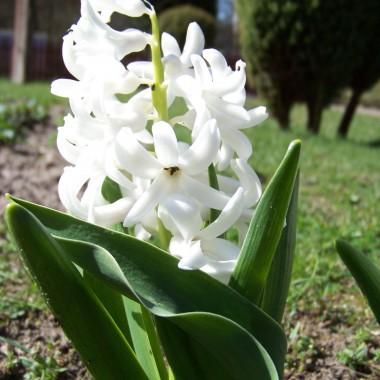 Kwiaty w moim ogrodzie  i nie tylko