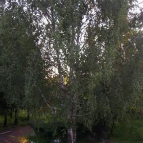 W moim ogrodzie.