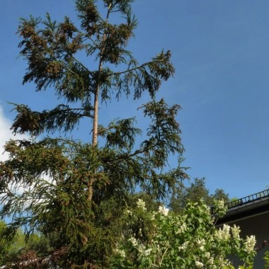 to cudaczne drzewo bez nazwy dosięgnie kiedyś nieba