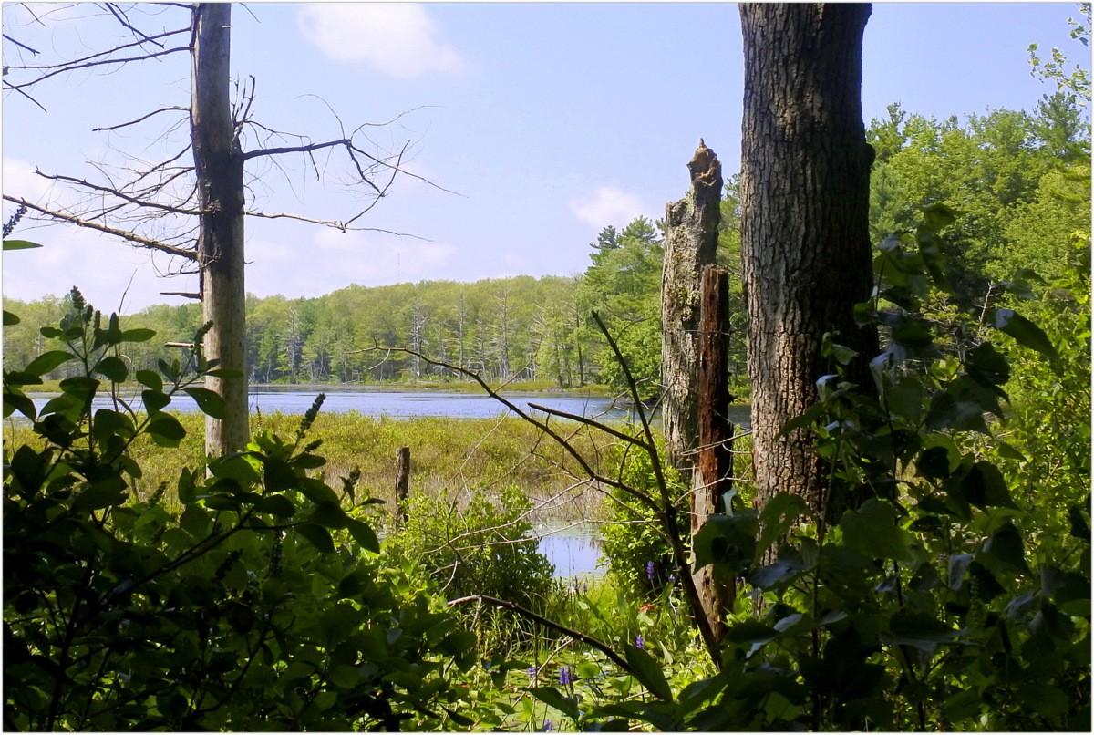 Leśne klimaty, Spokój,cisza..... - ..a to już Webster...