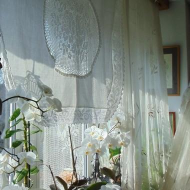...........i storczyki na oknie............