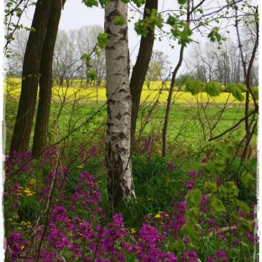 Majówka  na łonie natury &#x3B;