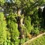 Pozostałe, Moje ogrodowe aranżacje.