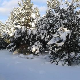 zima i moje sosenki