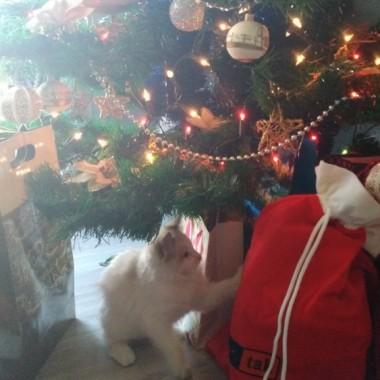 Wesołe Święta :-)