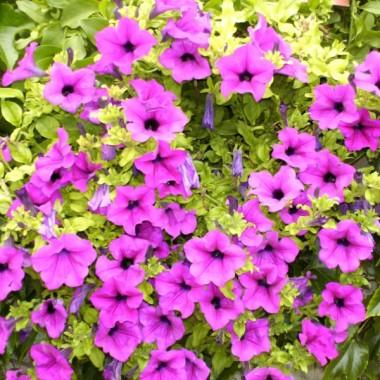 Ogrodowe kwiaty